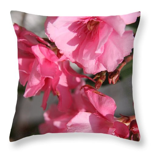 Oleander Throw Pillow featuring the photograph Bask In The Sun by Christiane Schulze Art And Photography