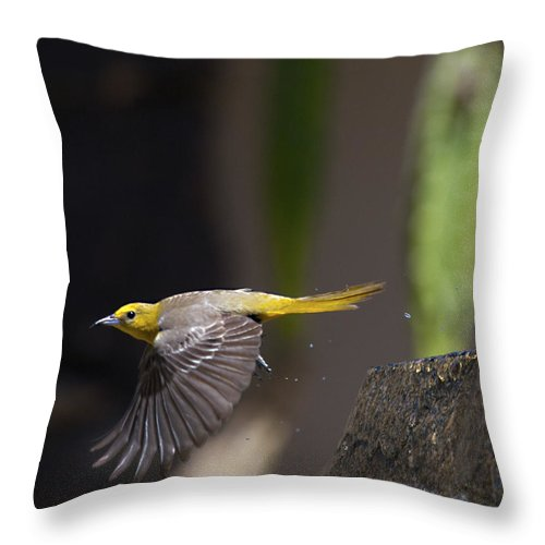 Birds Throw Pillow featuring the photograph Bathed by Joe Schofield