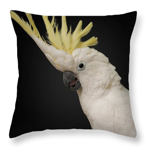 Bird Throw Pillow featuring the photograph Bay-b by Photos By Cassandra