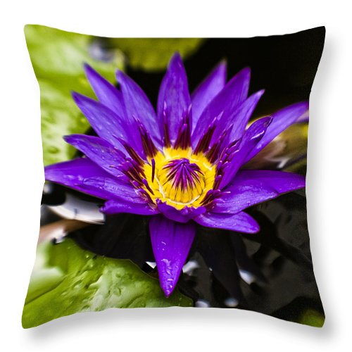 Lotus Throw Pillow featuring the photograph Bayou Beauty by Scott Pellegrin