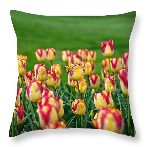 Be Different Throw Pillow featuring the photograph Be Different by Chris Fleming