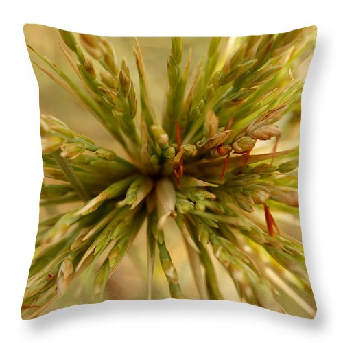 Beach Grass Throw Pillow featuring the photograph Beach Grass by Michaela Perryman