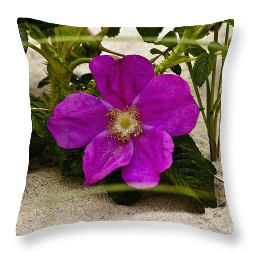 Beach Rose Throw Pillow featuring the photograph Beach Rose by Dennis Coates