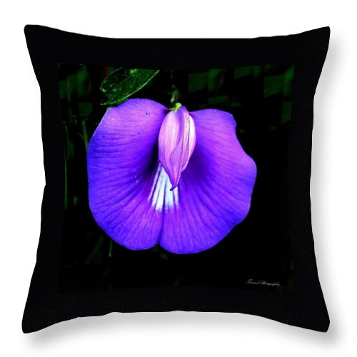 Wildflower Throw Pillow featuring the photograph Beach Wildflower by Debra Forand