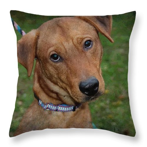 Hound Throw Pillow featuring the photograph Bear by Joyce Baldassarre