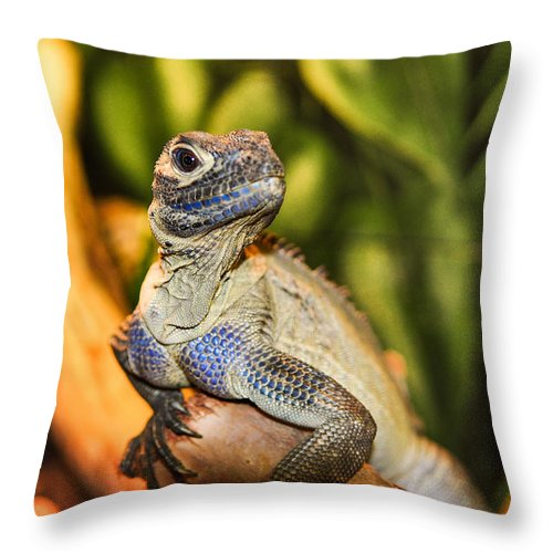 Pogona Throw Pillow featuring the photograph Bearded Dragon by Diane Wood