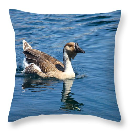 Bird Throw Pillow featuring the photograph Beautiful African Brown Goose by Denise Mazzocco
