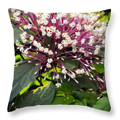 Flower Throw Pillow featuring the photograph Beautiful Bloom by Robert Storost