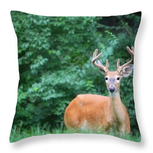 Buck Throw Pillow featuring the photograph Beautiful Buck by Peggy Franz