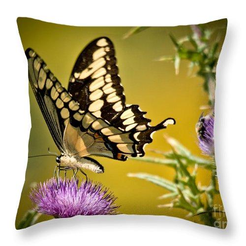 Giant Swallowtail Throw Pillow featuring the photograph Beautiful Golden Swallowtail by Cheryl Baxter
