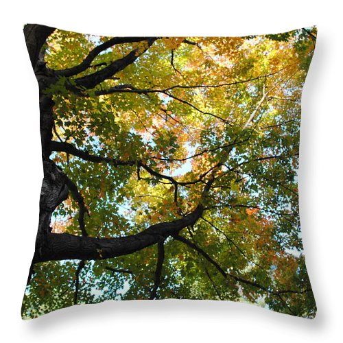 Fall Throw Pillow featuring the photograph Beautiful Leaf Blanket by Tammy Burgess