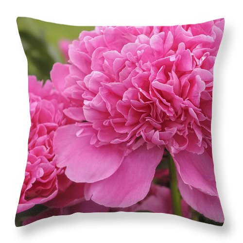 Pink Throw Pillow featuring the photograph Beautiful Pink Peony Albert Crousse Paeonia Lactifora Albert Cro by Marianne Campolongo