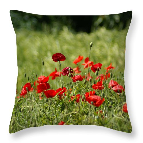 Poppies Throw Pillow featuring the photograph Beautiful Poppies 3 by Carol Lynch