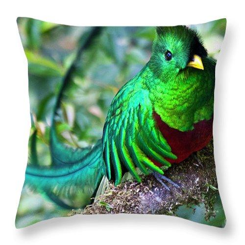 Quetzal Throw Pillow featuring the photograph Beautiful Quetzal 4 by Heiko Koehrer-Wagner