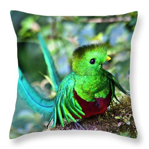 Bird Throw Pillow featuring the photograph Beautiful Quetzal 5 by Heiko Koehrer-Wagner