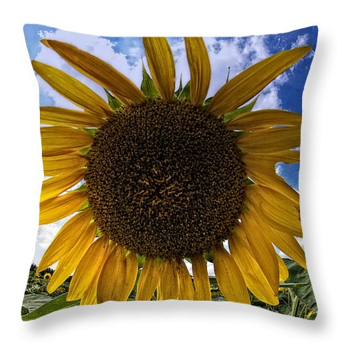 Sunflower Throw Pillow featuring the photograph Beautiful Sunflower by Alice Gipson