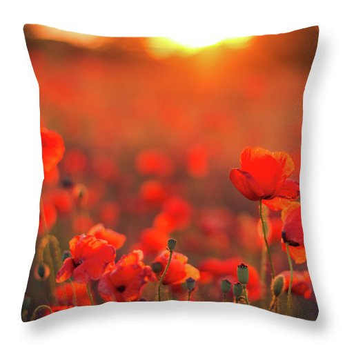 Tranquility Throw Pillow featuring the photograph Beautiful Sunset Over Poppy Field by Levente Bodo