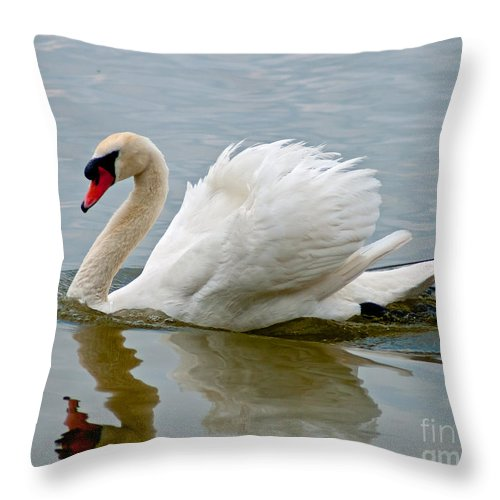 White Throw Pillow featuring the photograph Beautiful Swan by Stephen Whalen