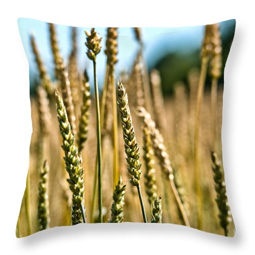 Wheat Throw Pillow featuring the photograph Beautiful Wheat by Cheryl Baxter
