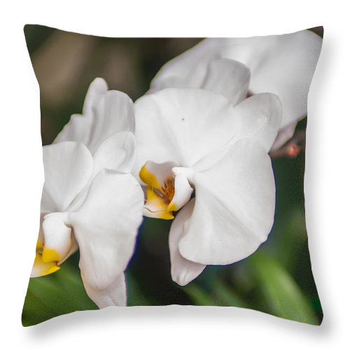 White Throw Pillow featuring the photograph Beautiful White Orchids Flower Bloom by Alex Grichenko