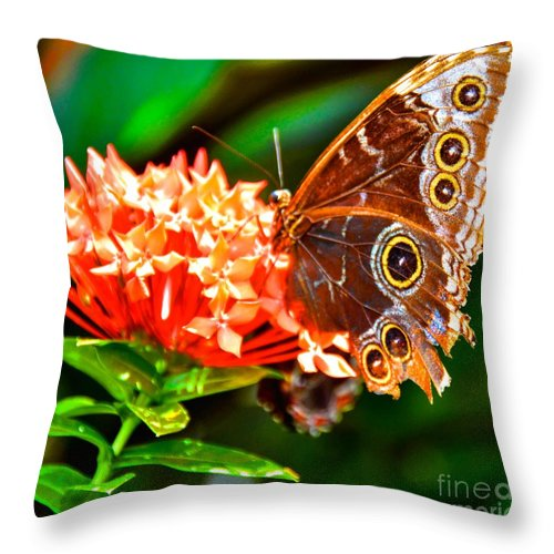 Butterfly Throw Pillow featuring the photograph Beauty by Debbi Granruth