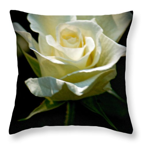 Sandra Clark Throw Pillow featuring the photograph Beauty Of A Rose by Sandra Clark