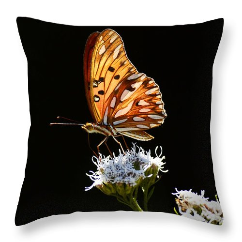Butterfly Throw Pillow featuring the photograph Beauty Of Nature Butterfly Brazil 2 by Bob Christopher