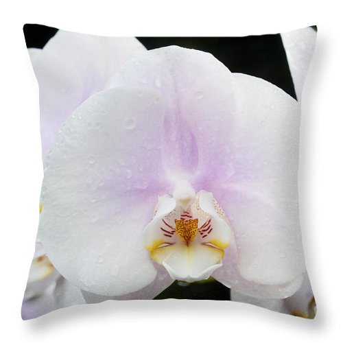 Orchid Throw Pillow featuring the photograph Beauty by Patty Colabuono