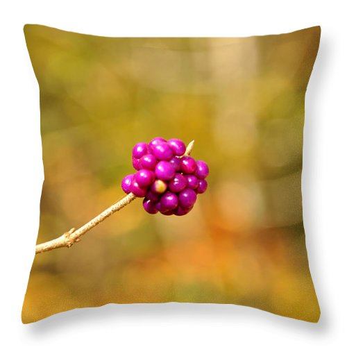 Single Throw Pillow featuring the photograph Beautyberry by Sonja Dover