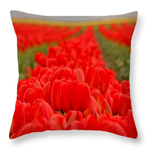 Tulips Throw Pillow featuring the photograph Beds Of Red by Peggy Collins