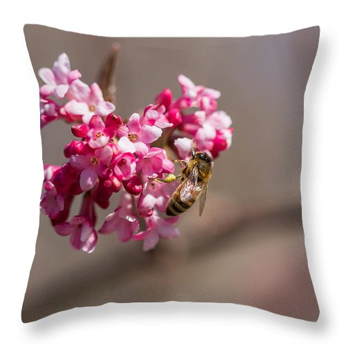 Flower Throw Pillow featuring the photograph Bee And Flower by Selim Tuzun