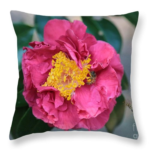 Camellia Throw Pillow featuring the photograph Bee And Wasp On Camellia by Carol Groenen