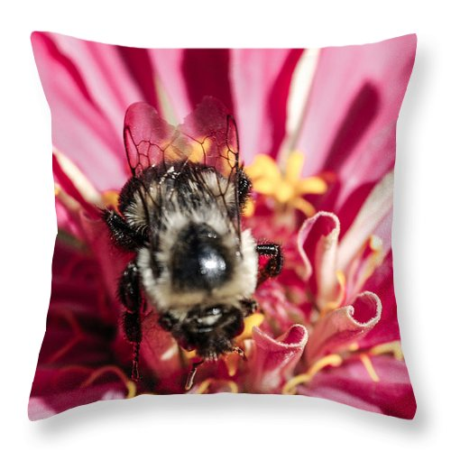 Bee Throw Pillow featuring the photograph Bee Close Up On Pinkish Red Flower by Optical Playground By MP Ray