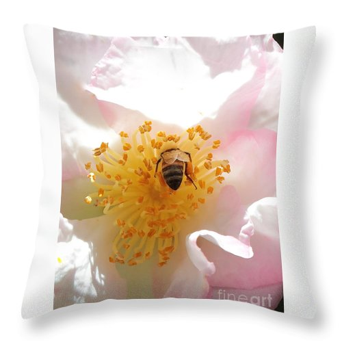 Camellia Throw Pillow featuring the photograph Bee In Camellia by Carol Groenen