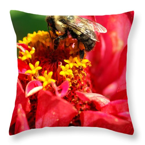 Zinnia Throw Pillow featuring the photograph Bee On A Zinnia Flower by Optical Playground By MP Ray