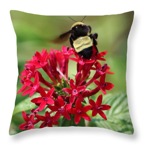 Bumble Bee Throw Pillow featuring the photograph Bee On Flower Cluster by Cynthia Guinn