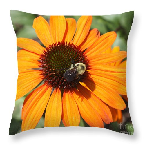 Bee On Flower Throw Pillow featuring the photograph Bee On Flower by John Telfer