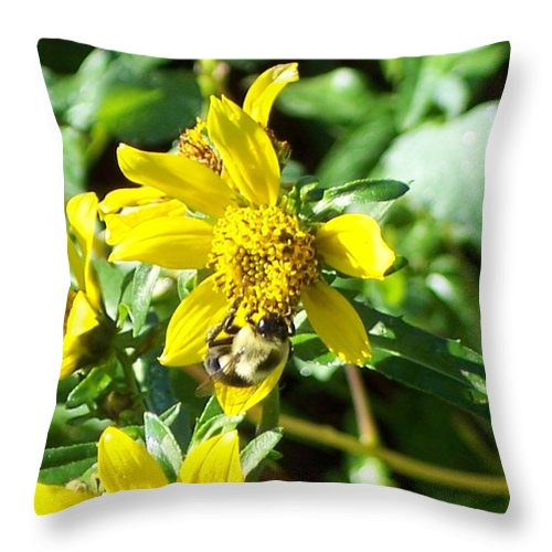 Bee Throw Pillow featuring the photograph Bee On Flower by Michelle Miron-Rebbe
