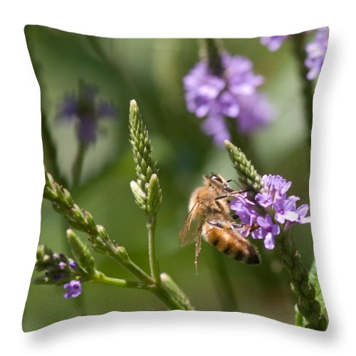 Bee Throw Pillow featuring the photograph Bee On Purple Loosestrife by Optical Playground By MP Ray