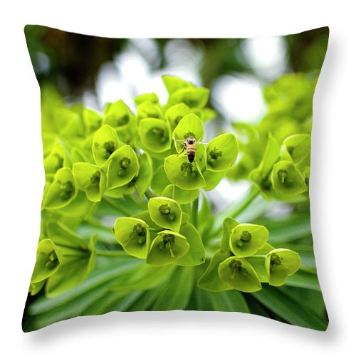 Insect Throw Pillow featuring the photograph Bee Pollenating Flower by Pete Starman