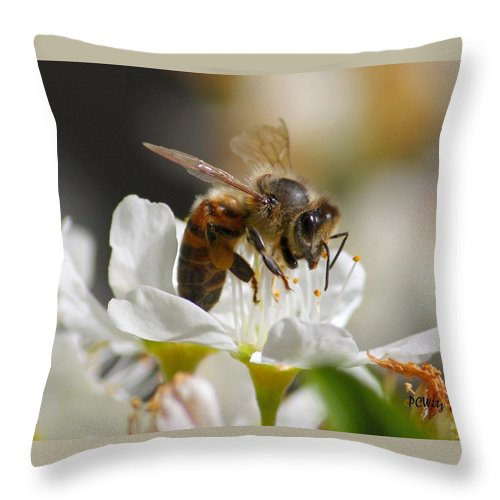 Bee Throw Pillow featuring the photograph Bee4honey by Patrick Witz