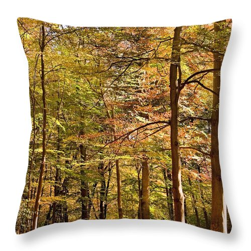 Landscape Throw Pillow featuring the photograph Beeches by Matthew Gibson
