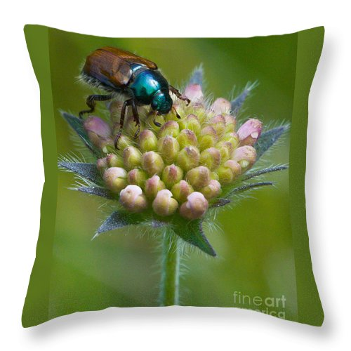 Animal Throw Pillow featuring the photograph Beetle Sitting On Flower by John Wadleigh