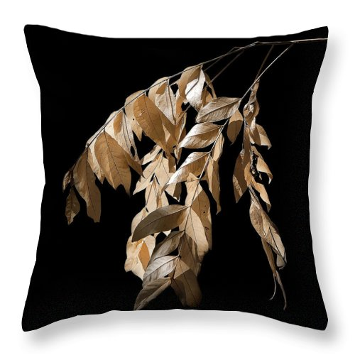 Fall Throw Pillow featuring the photograph Before the Fall by Lucy VanSwearingen