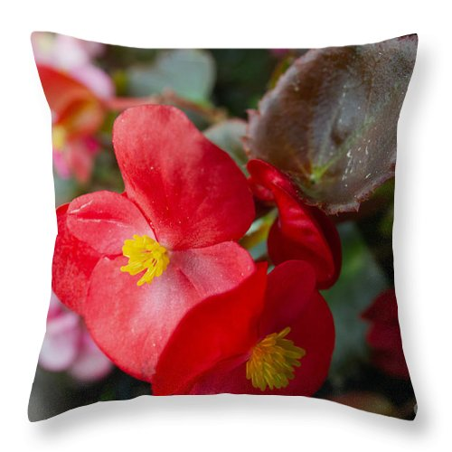 Environment Throw Pillow featuring the photograph Begonia 20140706-1 by Alan Look