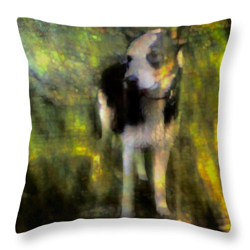 Dog Throw Pillow featuring the photograph Being by Suzy Norris