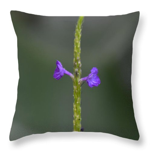 Detroit Throw Pillow featuring the photograph Belle Isle Flower by Randy J Heath