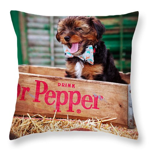 The Yorkshire Terrier Is A Small Dog Breed Of Terrier Type Throw Pillow featuring the photograph Belly Laugh by Sennie Pierson