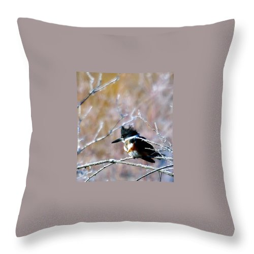 Birds Throw Pillow featuring the photograph Belted Kingfisher by Jeff Swan