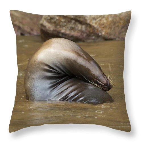 Yoga Pose Throw Pillow featuring the photograph Bendy Sealion by Allan Morrison
